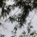 cropped-cropped-DSC01060.jpg